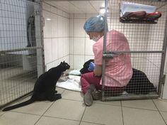Faites la connaissance de Lucifer, le chat « infirmier » qui réconforte les patients d'une clinique vétérinaire
