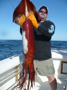 Giant squid . Wonder what that felt like reeling in?