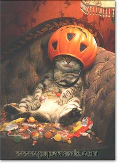 """Halloween card - verse inside: """"My motto.if it's worth doing, it's worth over-doing - Happy Halloween!""""This is my husband after an eventing at Mickey's Not So Scary Halloween Party! Cute Funny Animals, Cute Cats, Funny Cats, Crazy Cat Lady, Crazy Cats, Chat Halloween, Funny Halloween, Halloween Countdown, Halloween Pictures"""