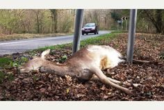 """Rise in roadkill """"depressing"""" says East Sussex animal charity"""