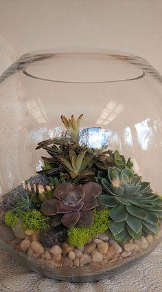 33 Best Succulent Terrarium Images Succulent Terrarium Gold Coast