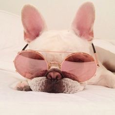 """""""Magnifique y Tres, Tres Chic"""", French Bulldog in Rose Colored Glasses."""