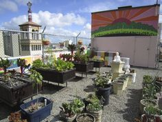 Joyce Sood of the GLIDE Foundation shows the rooftop garden at the Glide Memorial Church in San Francisco. More people are turning to roof gardens to grow their own food.