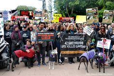 March for the Murdered Million Greyhounds, 7/24/16 - Sydney.