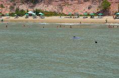 Baía dos Golfinhos (Praia da Pipa) - O que saber antes de ir - TripAdvisor