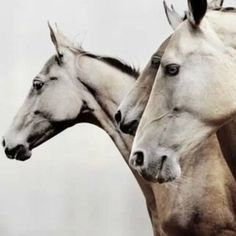 I think I could have horse art everywhere. They have a strange calming effect on me.. #horse #art