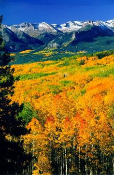 Aspen in Autumn! Such a sight to see, I would recommend coming out for a week in fall to see the leaves changes, it's unbelievable.