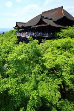 京都清水寺の清水の舞台と鮮やかな新緑   Kiyomizu Temple, Kyoto
