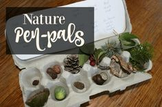Nature Pen-Pal Exchange: exchanging nature from across the country with other homeschool families