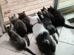 too cute, but way too many cats.