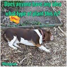 Garden discovery. #gardening #plant #identy #Hangover #family #dogs #MinPinCountry #Cute #MammasBoy #itsjustajoke