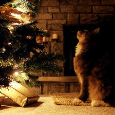 I saw this picture and thought...I know what that cat is thinking. I had a cat that did just that.