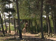 Giraffe burgers zoo