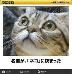 名前が、「ネコ」に決まった