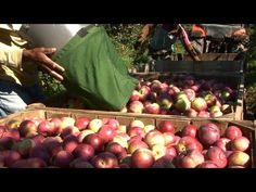 How to Bake an Apple Pie and See the World - How apples Are Grown And Harvested - YouTube