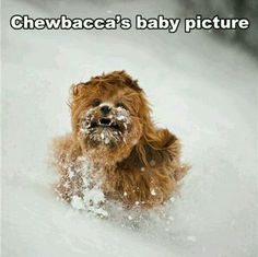 Baby Chewbacca Hilarious Animal Pictures, Funny Star Wars Pictures, Talking Animals, Hilarious Animals, Funniest Animals, Hilarious Photos, Funny Images, Funny Geek, That's Hilarious