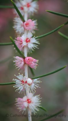 Dainty pink wildflower
