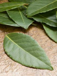 Whether you're growing a rose bush or an oak tree, there are lot of factors to take care of, when growing a plant. Here, learn how to grow a bay leaf tree.