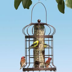 Beautifully detailed bird feeder welcomes a variety of songbirds  Outer cage is resistant to squirrels and large birds. Fill with any type of seed.