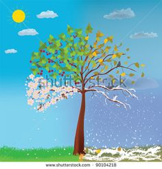 Four seasons tree - stock vector