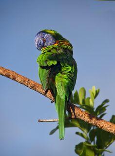 ✳ Bird tree colourful blue sky - download photo at Avopix.com for free    🆕 https://avopix.com/photo/48924-bird-tree-colourful-blue-sky    #parrot #macaw #bird #lorikeet #lory #avopix #free #photos #public #domain