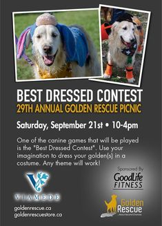 Rescue Dogs, Imagination, Life Is Good, Nice Dresses, Picnic, Events, Costume, Website, Amazing