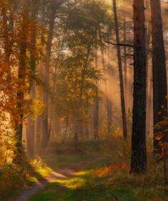 Autumn path by Marat Akhmetvaleev on 500px (Russia)