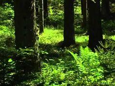 Sonidos del Bosque Primavera