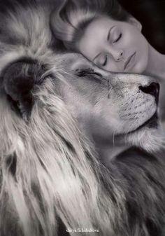 A Passionate Woman. Lion Pictures, Art Pictures, Lion Love, Lion Painting, Lion Wallpaper, Le Roi Lion, Prophetic Art, Lion Of Judah, Lion Art