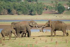 Elephants near human habitation.