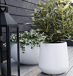 flower pots outdoor On my InstaStories this Sunday, I shared a little project that I was doing at home. I had a lot of outdoor flower pots that really needed a fresh up The post New Outdoor Flowers, Outdoor Planters, Garden Planters, Outdoor Gardens, Concrete Planters, Rockery Garden, Potted Garden, Planter Pots, Planter Ideas