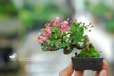 Adorable and tiny - I think this may be a Crepe Myrtle. Flowering Bonsai Tree, Indoor Bonsai Tree, Bonsai Art, Bonsai Plants, Bonsai Garden, Garden Trees, Bonsai Trees, Hydroponic Gardening, Hydroponics