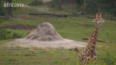 Safari Snapshot