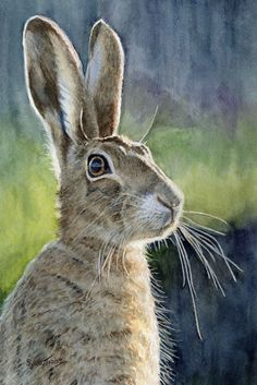 Hare. A  watercolour by Sylvia Twiss