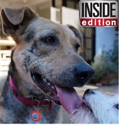 WagAware Charm on Inside Edition! Get yours today www.wagaware.com. Buy a Charm. Save a Dog. Support Adoption. Join the Ruff-olution! #puppy #dog #wag #aware #wagaware #adoption #charm #kikilulu #benny #barkley #fluffy #white #puppyeyes #cute #sweet #love #home #charity #donation #petrescue #savelives #goodcause #helpsaveanimals