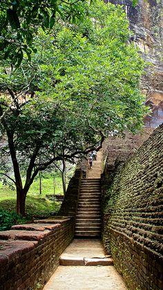 Sigiriya; The Lion Rock... - The new adventures of Cj Jayamaha