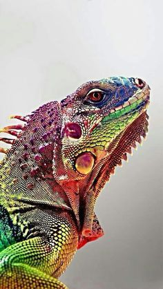 Well Labelled Diagram Of A Lizard Fresh Tokay Gecko They Are Beautiful They Change Colors They Can Jump Typ Colorful Animals Nature Animals Animals Beautiful