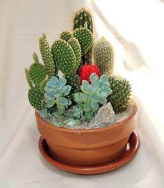 Fique a conhecer as nossas dicas de jardinagem em: www.asenhoradomonte.com …                                                                                                                                                                                 Mais