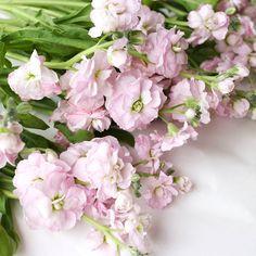 水切りしたり下のほうの葉を取ったりお花を活ける前の下準備が好きですかわいさ高まるいい時間です #北欧暮らしの道具店#花#お花#ザ花部#花のある暮らし#花のある生活#朝#あさ#朝時間 by hokuoh_kurashi