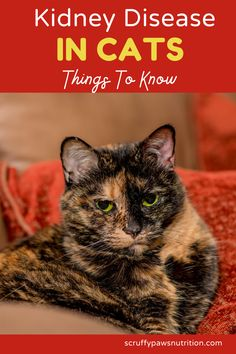 How to identify Signs & Symptoms of kideny disease in cats? All about Kideny disease in cats, you should know. Cool Cat Toys, Cool Cats, Cat Health, Health Tips, Baby Cats, Cats And Kittens, Cat Diet, Silly Cats, Sphynx Cat
