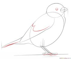 How to draw a house sparrow | Step by step Drawing tutorials