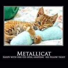 """Love cats and metallica (favorite pet and favorite band) funny cause these are the (modified) lyrics to """"Enter Sandman"""" Funny Animal Memes, Cat Memes, Funny Animals, Cute Animals, Funny Memes, Animal Funnies, Funniest Animals, Funny Captions, Crazy Cat Lady"""
