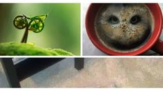 19 optische Täuschungen, deren Haupthelden Tiere sind. Lächeln garantiert!