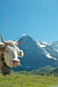 Grindelwald, Bern, Switzerland Copyright: Daniel Solinger