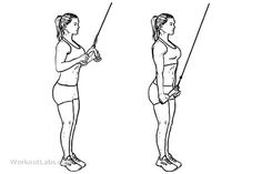 Tricep Cable Rope Push /Pull Downs | WorkoutLabs