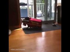 One of the BEST vines I have ever seen!! #Firefighter #Dachshund
