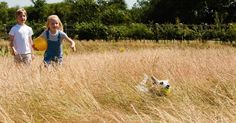 Dogs Trust launches Get A Dog campaign