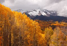 Leaf Lookin Around Telluride | Mountain Photographer : a journal by Jack Brauer Brilliant aspens and view of Wilson Peak, the famous fourteener near Telluride, after the first snows of autumn.
