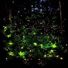 .fairy lights