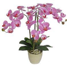 imagenes de orquidea phalaenopsis - Buscar con Google